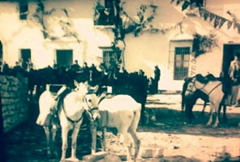 caballos el paseo 3 etc