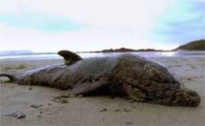 Para este cetáceo quedaba claro que se había actuado tarde y mal