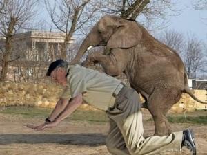 Desde el percance de Botsuana, con rotura de la cadera, y todo cuanto trascendió, elefante y Corinna incluidos, el crédito del Rey cayó en picado.