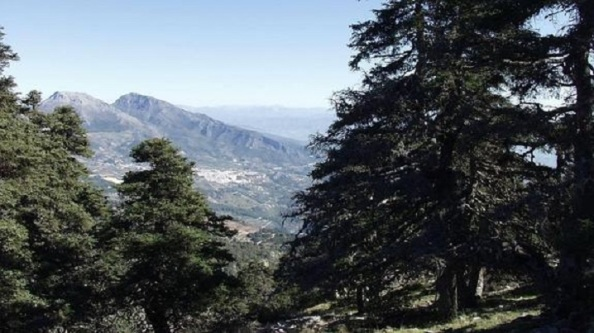 Parque Natural de Sierra de las Nieves, pinsapos y Yunquera al fondo