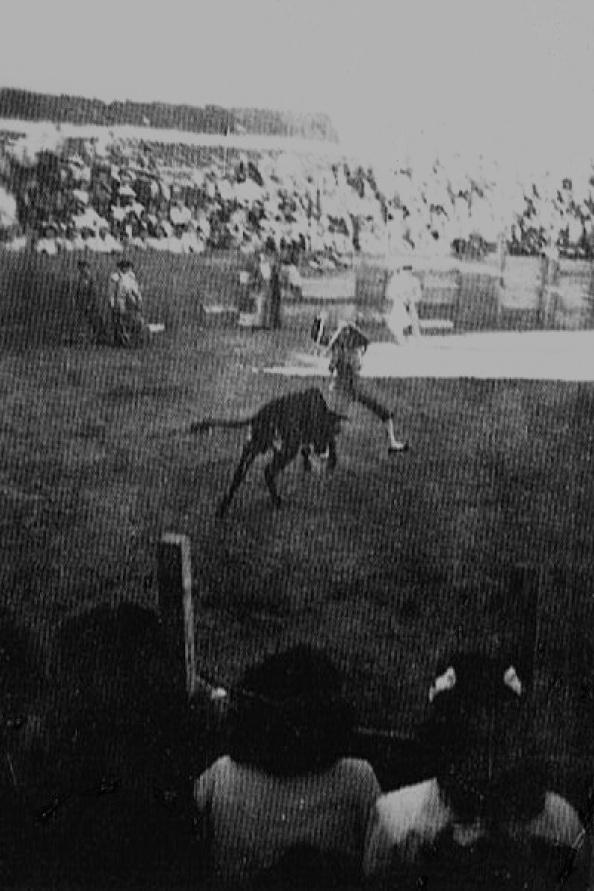 A partir de los años veinte del siglo pasado, volvieron las corridas de toros a la explanada existente a la entrada a Jimena, una vez que quedó remozado su coso, que además fue su lugar tradicional para realizarlas. Fuente: Ediciones OBA.