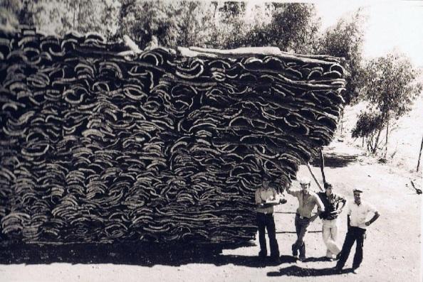 Planchas de corchos apiladas en Jimena. Fuente: Ediciones OBA