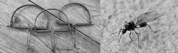 Trampas y alúas que se empleaban para la cacería de pequeñas aves, los llamados pajaritos. Fuente: Google.