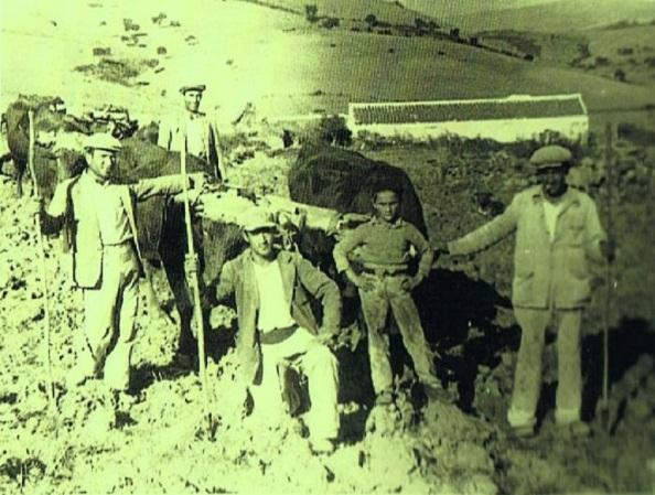 Grupos de jimenatos trabajando en el campo en la siega o arando la tierra con las yuntas los bueyes que al cabo de semanas o meses aparecían por las barberías. Fuente: Ediciones OBA