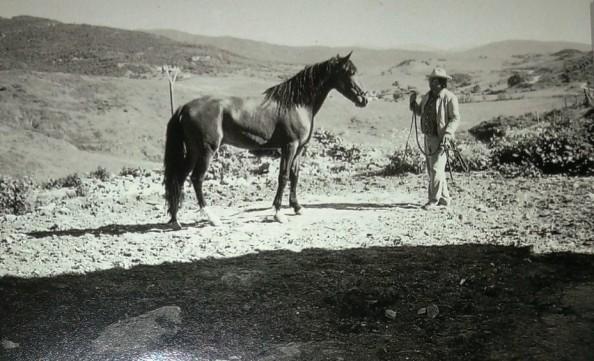 jacobo domando un caballo jimena